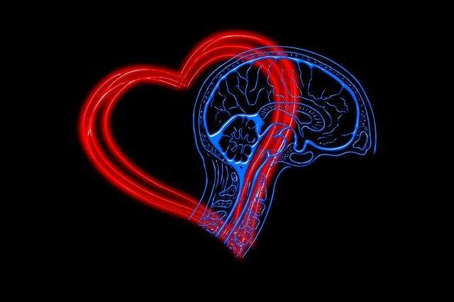 heart-4682756_640.jpg